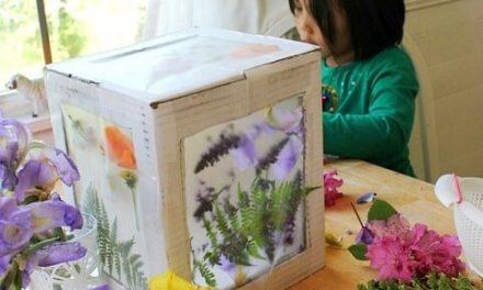 Fabriquez un attrape-soleil magique en 3D pour la nature à partir d'une boîte en carton