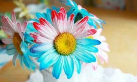 Comment teindre des fleurs avec deux couleurs